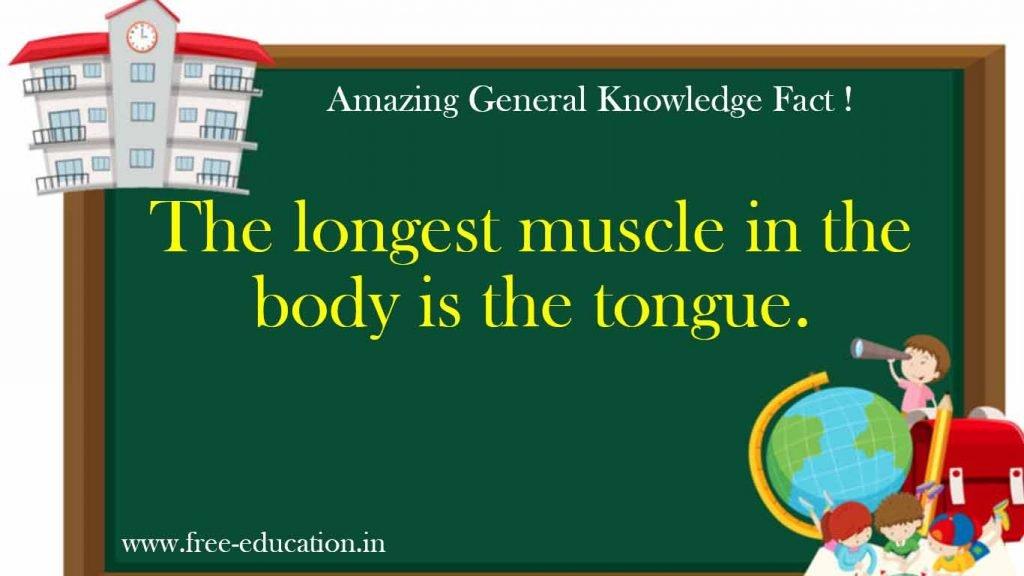 Longest muscle in body